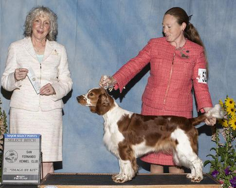 redsage welsh springer spaniel, puppies, information, breed